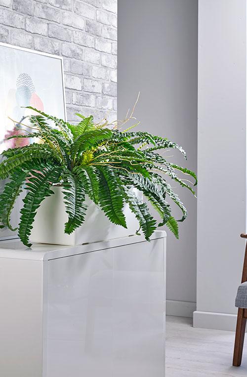 prospect plants boston fern cabinet trough