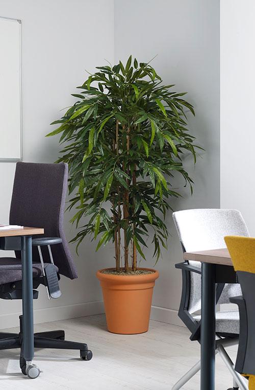 prospect plants design bamboo