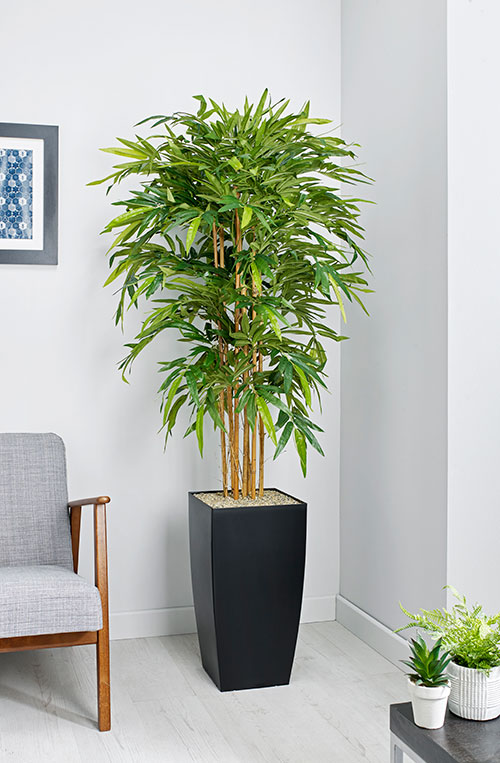 prospect plants essential bamboo