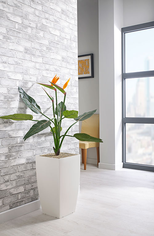 prospect plants essential bird of paradise