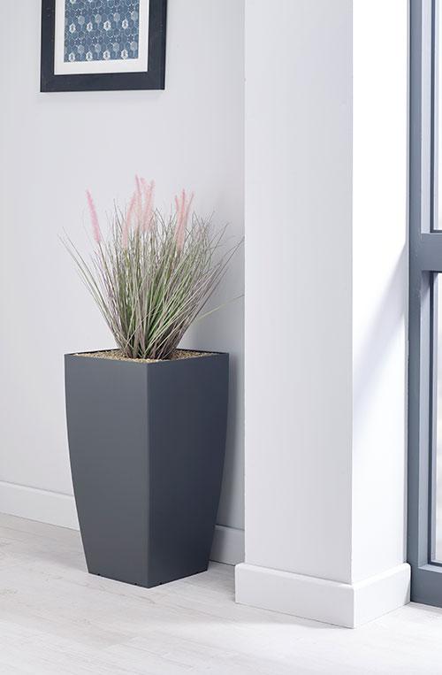 prospect plants essential fountain grass