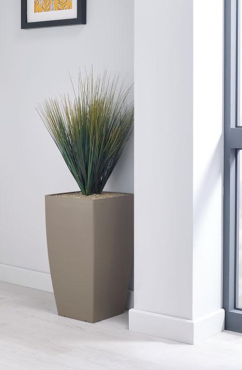 prospect plants essential savanah grass