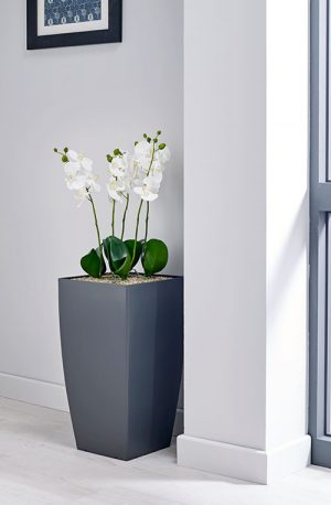 prospect plants essential white orchid