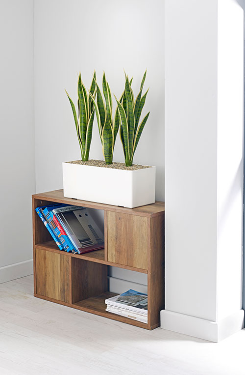 prospect plants mother in laws tongue cabinet trough